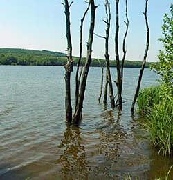 arbres près du lac